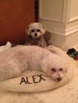 Alex and Mason The Dogs