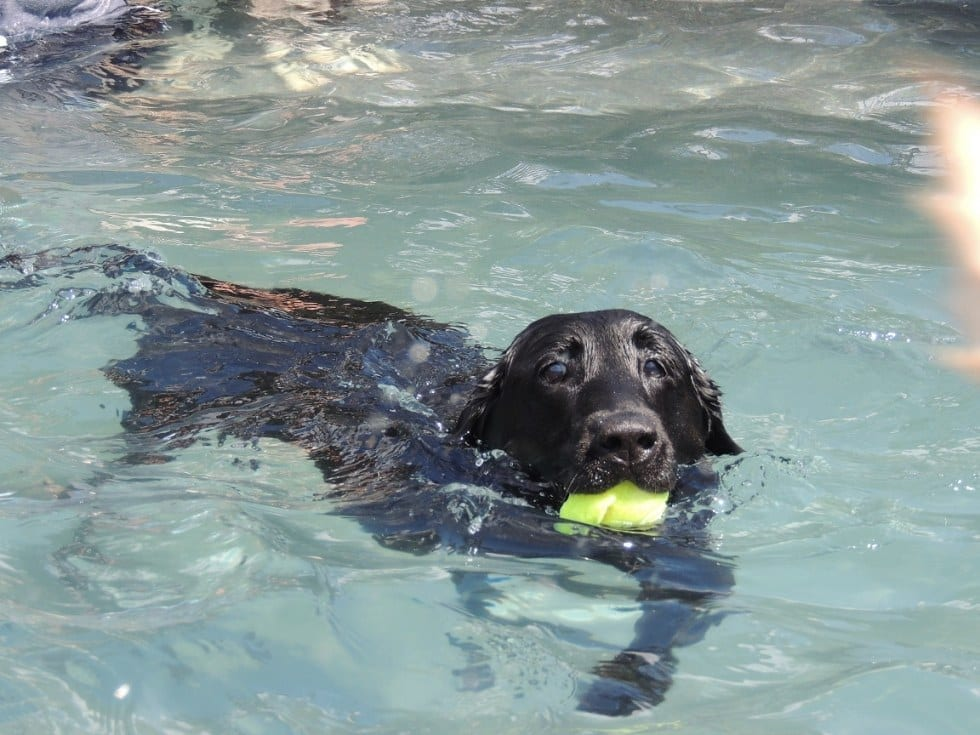Dog Playing With Ball In Water