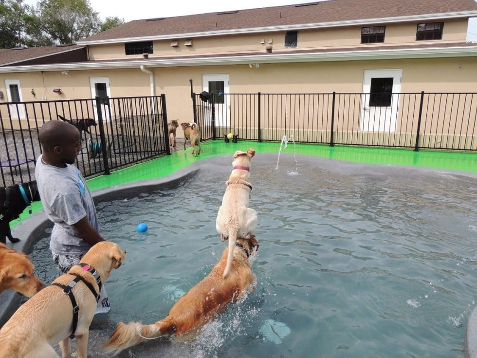 Dogs Jumping Into Pool
