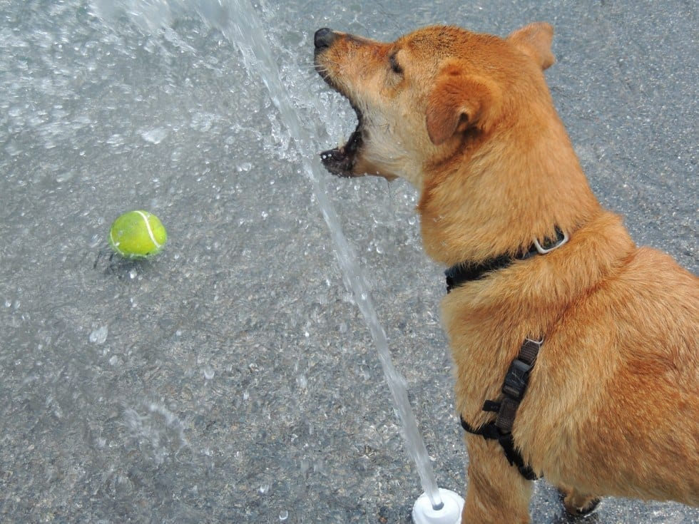 Dog Playing With Water