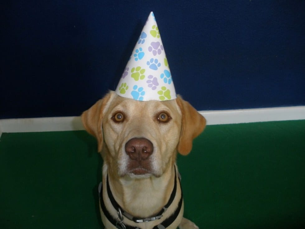 Dog With Birthday Hat On