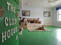 Dogs In The Clubhouse