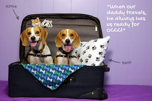 Dogs Sitting In Suitcase
